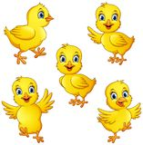 Cartoon little chicks collection set vector illustration