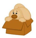 Cartoon little toy bunny in box Stock Image