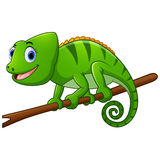 Cartoon lizard on branch Royalty Free Stock Image