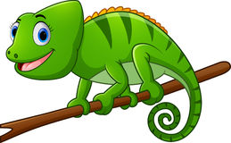 Cartoon lizard on branch Stock Images