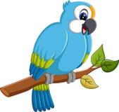 Cartoon macaw Royalty Free Stock Photo