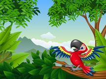 Cartoon macaw in the jungle Stock Photo