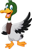 Cartoon Mallard Duck Waving Isolated On White Background Royalty Free Stock Photos
