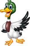 Cartoon mallard duck waving isolated on white background Royalty Free Stock Photography