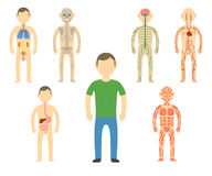 Cartoon man body anatomy. Stock Images