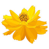 Cartoon marigold flower. Colorful floral print design. Yellow marigold flower, isolated on white background. Hand drawn vector illustration Stock Photo