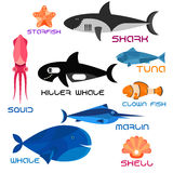 Cartoon marine animals in flat style. Colorful giant blue whale, killer whale and reef shark, striped orange clown fish, shiny marlin and tuna, pink squid Stock Photography