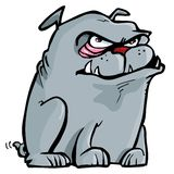 Cartoon of mean bulldog. Isolated on white Stock Image
