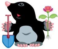 Cartoon mole. Holding flower and shovel,image isolated on white background Royalty Free Stock Photography