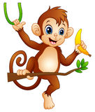Cartoon monkey on a branch tree and holding banana. Illustration of Cartoon monkey on a branch tree and holding banana vector illustration