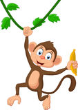 Cartoon monkey hanging Stock Images