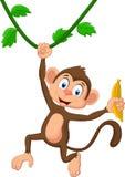 Cartoon monkey hanging. Illustration of Cartoon monkey hanging Stock Images