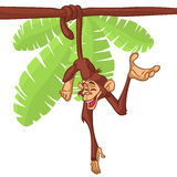 Cartoon monkey hanging from the tree on its tail. Vector illustration stock image