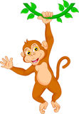Monkey Stock Photos and Images 62934 Monkey pictures and
