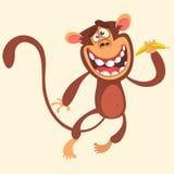 Cartoon monkey holding banana and jumping. Vector illustration of smiling chimpanzee character isolated. Royalty Free Stock Photo