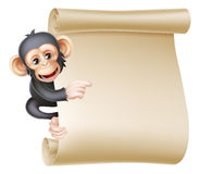 Cartoon Monkey Scroll. Cute cartoon chimp monkey like character mascot peeking around a scroll banner sign and pointing at it Stock Image