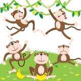 Cartoon monkey set Stock Photos