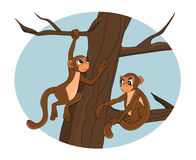 Cartoon monkeys on a tree Royalty Free Stock Images