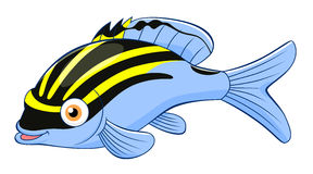 Cartoon monocle bream Royalty Free Stock Images