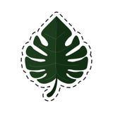 Cartoon monstera tropicalplant icon Stock Image