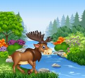 Cartoon moose with big horns in Beautiful river in forest Stock Photography
