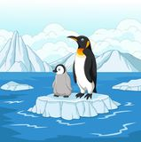 Cartoon mother and baby penguin on snowy field Royalty Free Stock Photos
