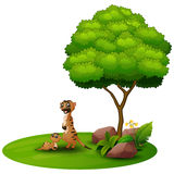 Cartoon mother meerkat with her little baby under a tree on a white background Stock Photos