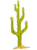 Cartoon Nature Plant Cactus Royalty Free Stock Photography