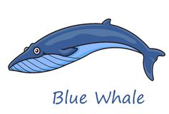 Cartoon ocean blue whale. Funny cute cartoon blue whale isolated on white background for nautical, wildlife and ecology design Royalty Free Stock Photos