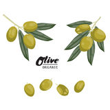 Cartoon olives. Ripe green vegetable. Vegetarian delicious. Eco organic food.  Flat vector design, isolated on white background Stock Photography