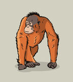 Cartoon Orangutan ape Royalty Free Stock Image