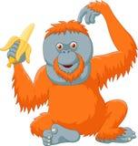 Cartoon orangutan eating banana isolated on white background Royalty Free Stock Photos