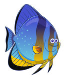 Cartoon orbicular batfish Royalty Free Stock Images