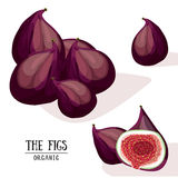 Cartoon organic figs. Vector illustration.  Royalty Free Stock Photo
