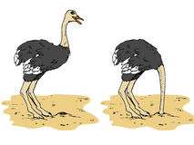 Cartoon ostrich with head below Stock Photo