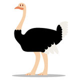 Cartoon Ostrich Isolated On Blank Background Stock Images