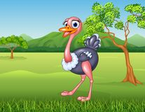 Cartoon ostrich in the jungle Stock Images