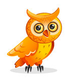 Cartoon owl Stock Images
