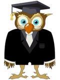 Cartoon owl Royalty Free Stock Photography
