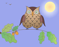 Cartoon an owl on an oak branch. Stock Photos