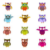 Cartoon owl set vector illustration. Cute vector owl characters showing different species include screech owl, long-eared owl, snowy owl, great horned owl, barn Royalty Free Stock Images