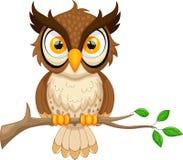 Cartoon owl sitting on tree branch Stock Image