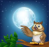 Cartoon owl on a tree branch in the night Royalty Free Stock Images