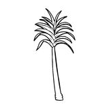 Cartoon palm tree Stock Photo