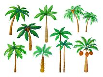 Cartoon palm tree. Jungle palm trees with green leaves, coconut beach palms isolated vector royalty free illustration