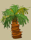 Cartoon palm tree with a thick short barrel Stock Image