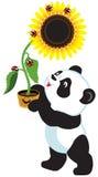 Cartoon panda holding a sunflower Royalty Free Stock Photos