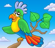 Cartoon parrot on branch. Color illustration Royalty Free Stock Photography