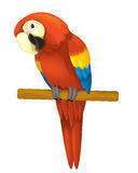 The cartoon - parrot - illustration for the children Stock Images