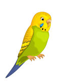 The cartoon - parrot - illustration for the children Royalty Free Stock Photography